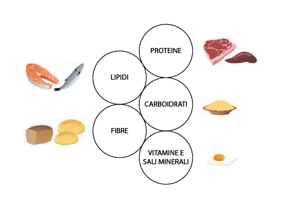FIG. 1 I pilastri dell'alimentazione.